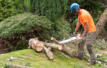 additional services offered by Truro tree surgeons