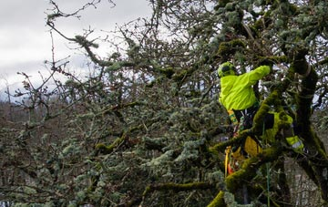 experienced Truro arborists are needed