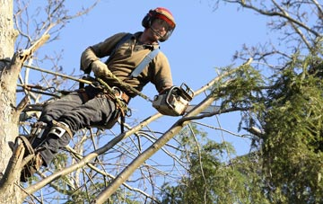 hiring experienced Truro tree surgeons