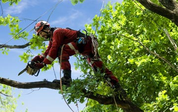 find trusted rated Truro tree surgeons in Cornwall