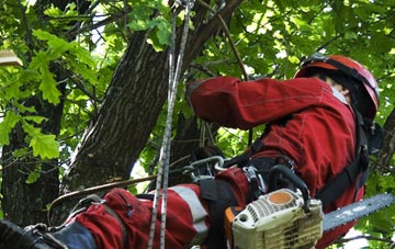 hiring professional Truro tree surgeons