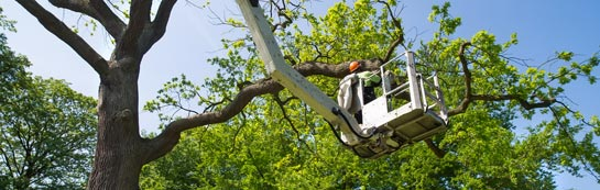 Truro tree surgery services
