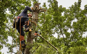 tree surgeon Truro, Cornwall