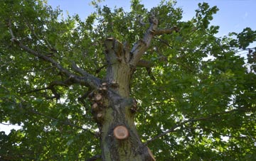 what is Truro tree surgery?