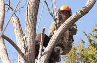 Truro tree surgeon services