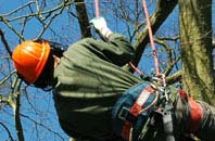 free Truro tree surgeon quotes