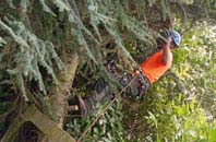 free Truro tree surgery quotes